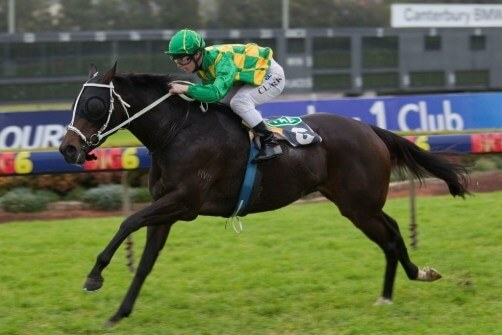 Redoute's Choice eyes up third General Sires' title