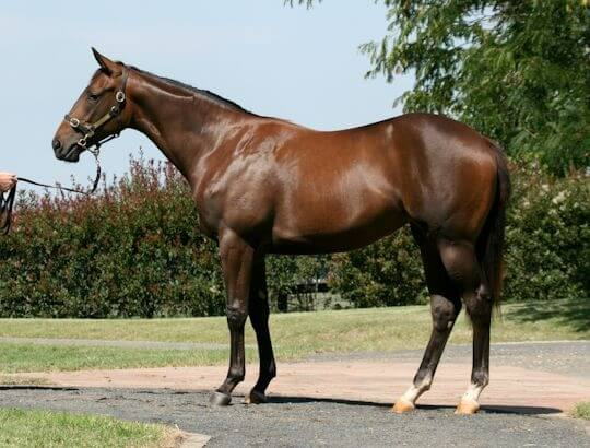 Redoute's Choice filly wins for Shadwell