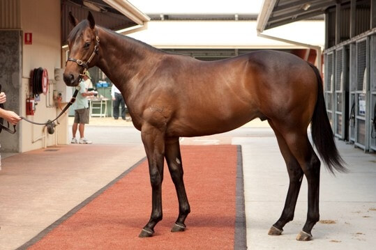 Redoute's Choice colt makes $750,000