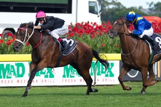 83rd stakeswinner for Redoute's Choice
