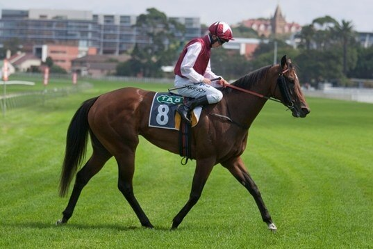 Fifth century of winners for Redoute's Choice