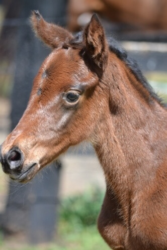 It's a filly for Miss Finland