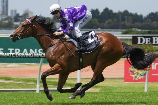 Starry fillies give Not A Single Doubt a two-city double…