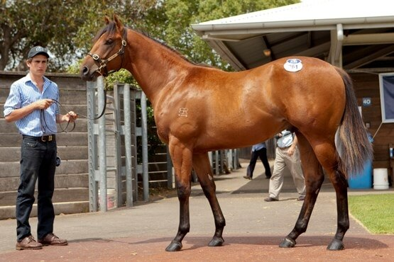 Not A Single Doubt & Snitzel top the Classic Sale