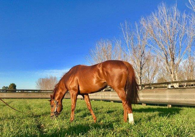Arrowfield roster assembles for Open House