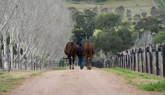 Exciting Job Opportunity at Arrowfield Stud