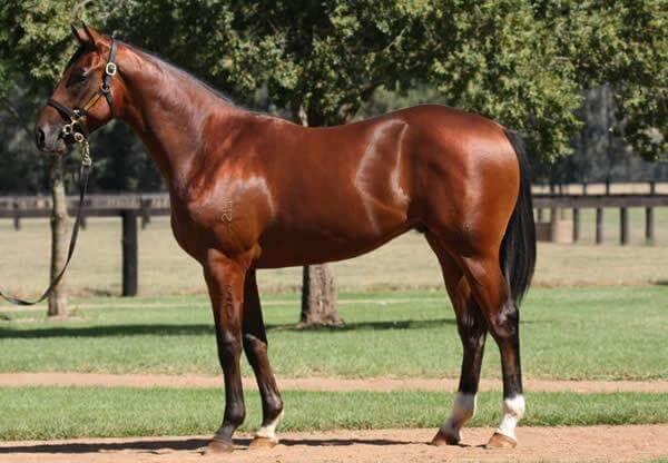 Wednesday double for Smart Missile