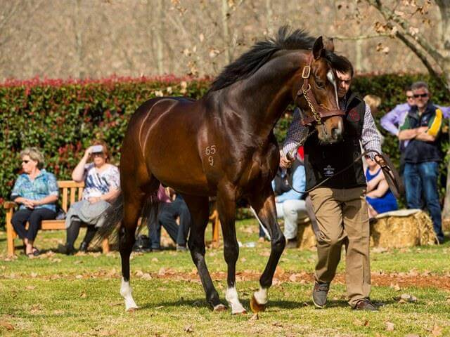 Dundeel weanling makes $130,000