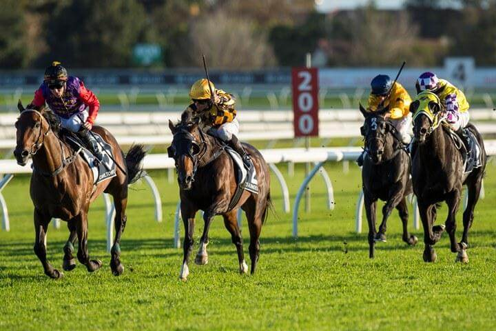 Dundeel rated world's best NZ-bred performer