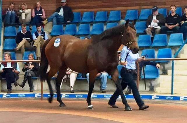 $280,000 paid for Johan's Toy in foal to Dundeel