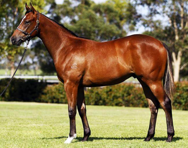 King's Troop marches in at Warwick Farm
