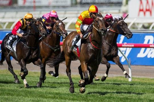 Australia's new sprinting star, by Redoute's Choice