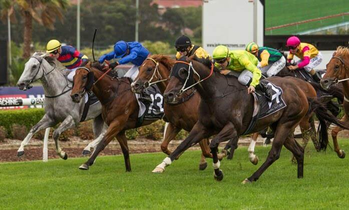 Redoute's Choice sons end 2016 with a flourish