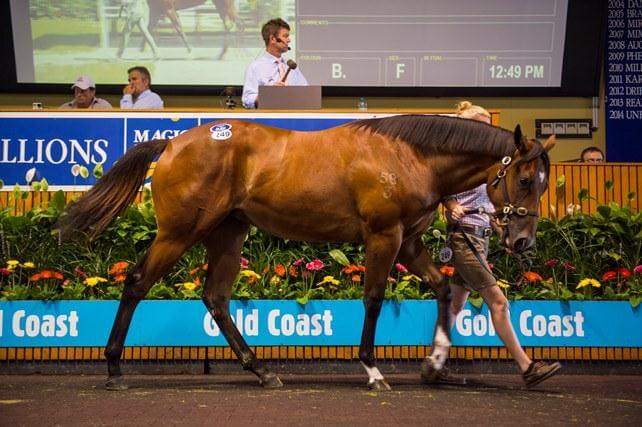Arrowfield roster makes Millions magic