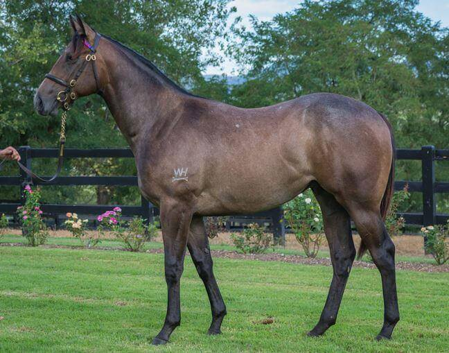 $400,000 for Not A Single Doubt colt