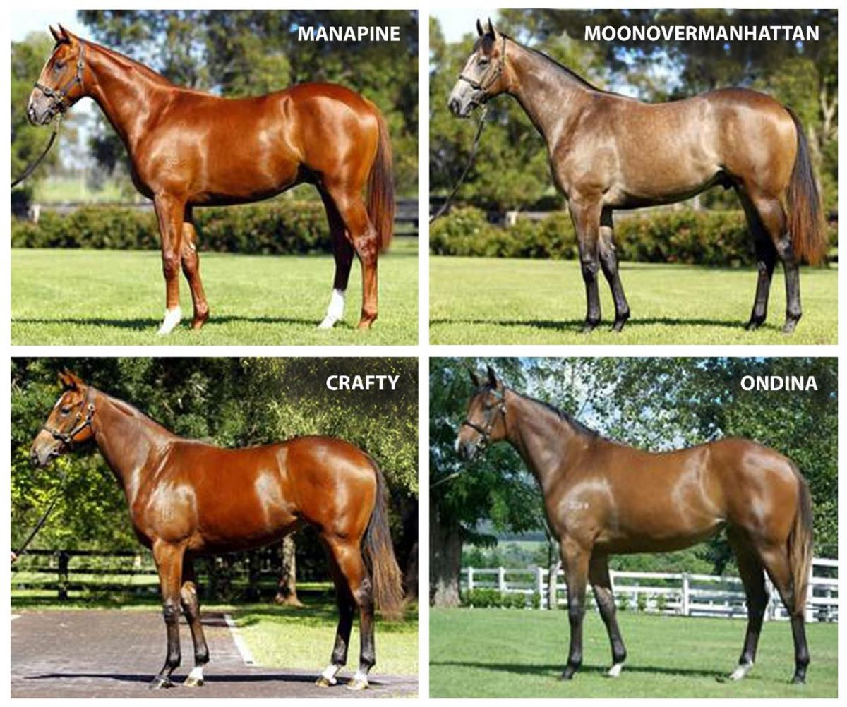 One sale, three sires, 12 stakeswinners