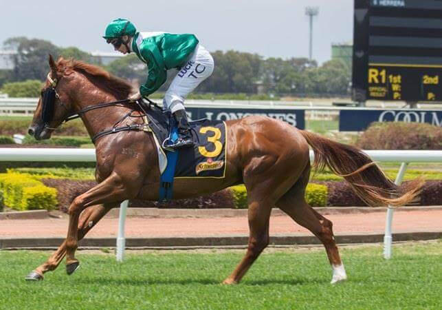 Ryan adds milestone winner to Snitzel's record