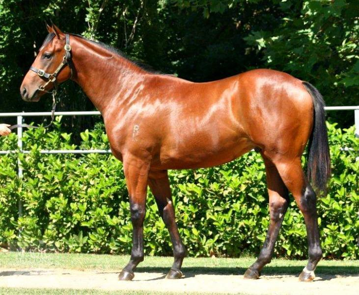 Redoute's Choice strikes with 64th million-dollar yearling