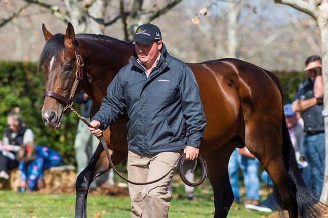 Visit Arowfield's Stallion Open House in August
