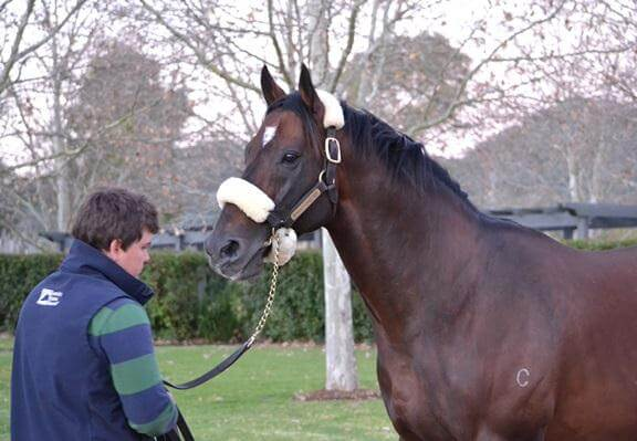 Redoute's Choice returns to Arrowfield