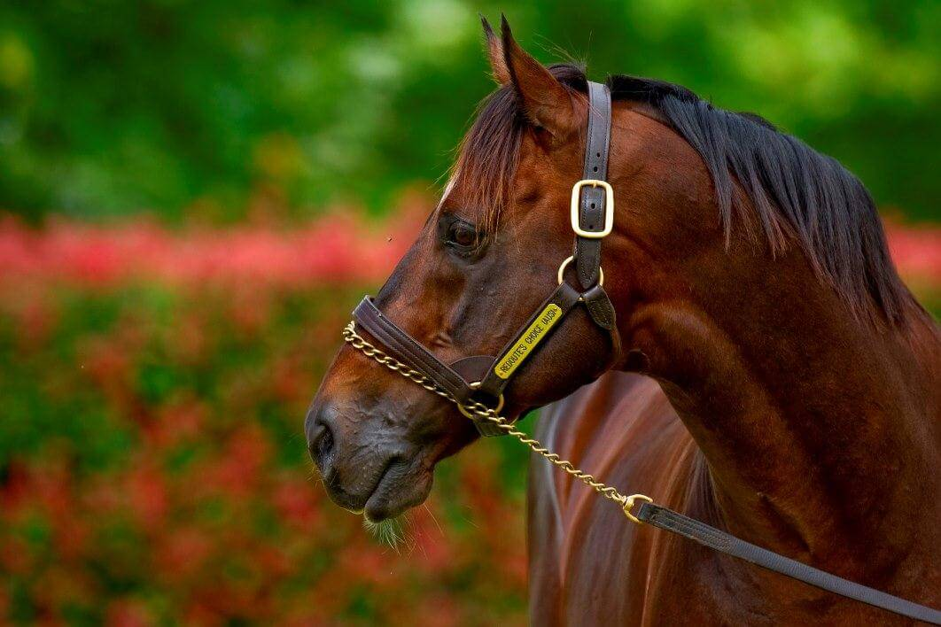 Second stakes win for Redoute's Choice mare