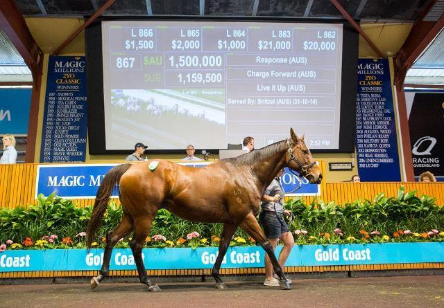 Arrowfield-sired mares make Millions