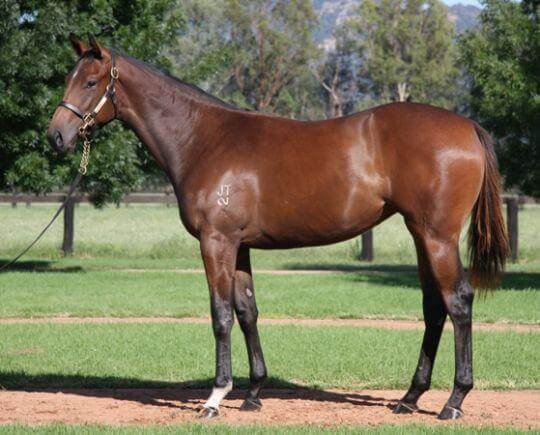 Winning debut for Moody's Redoute's Choice filly