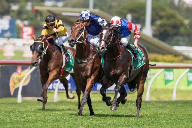 Group 3 quinella for Not A Single Doubt & Snitzel