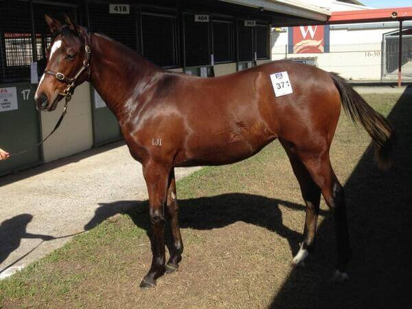 Strong demand for Smart Missile weanlings