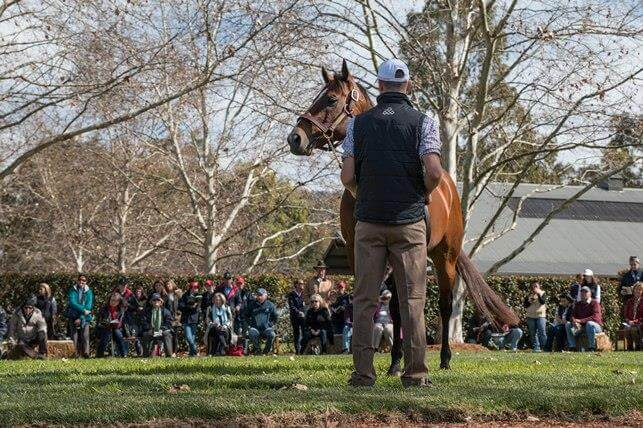 Thank you for visiting Arrowfield!