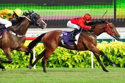 Stepitup named Singapore's Champion 3YO