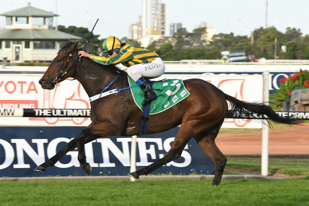Quality & value in Arrowfield's Classic yearlings