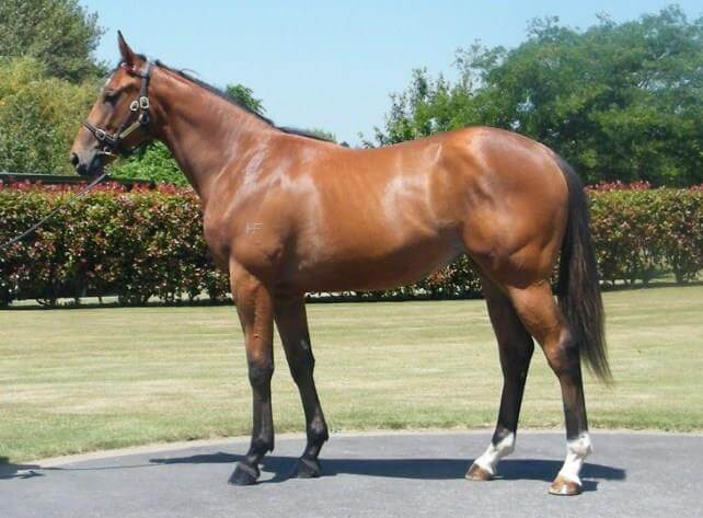 International stakes double for Redoute's Choice