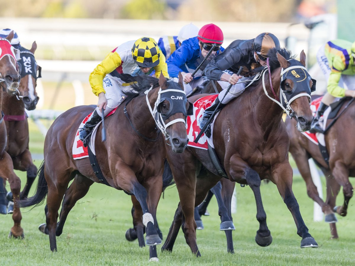 Snitzel closes on stakeswinners record
