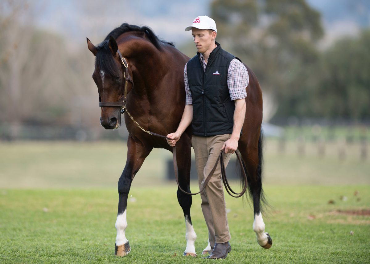 Maurice foal sells for $A2.05 million