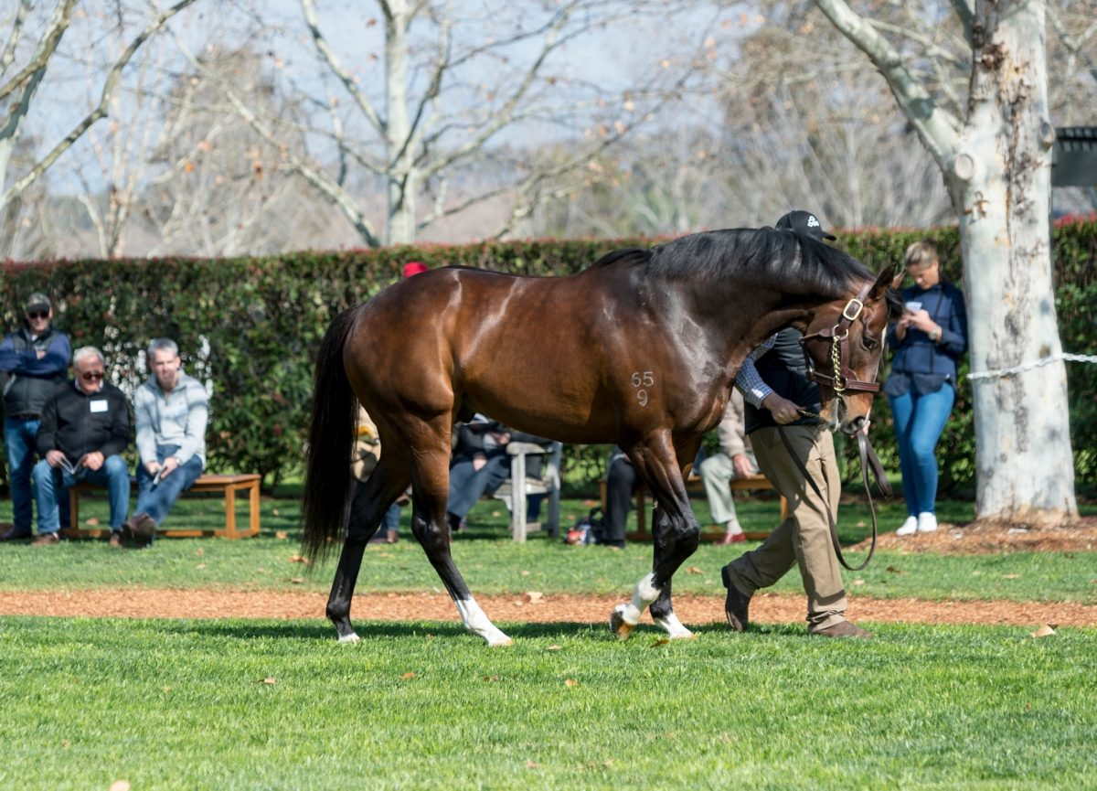 Dundeel colt on New Zealand Derby trail